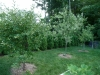 2012 - Fruit Trees