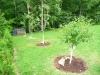 2011 - Fruit Trees
