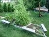 2012 - Rowan's Garden
