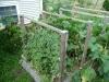 2012 - Snap Peas, Cucumbers