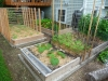 2011 - Zucchini, Beans, Lettuce, Squash, Cucumbers, Tomatoes